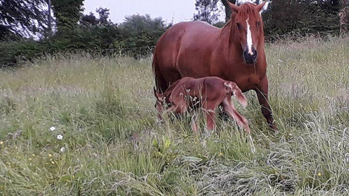 Une nouvelle naissance cette nuit une belle petite…