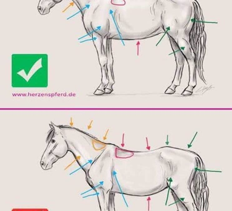 Difference de morphologie entre *Un cheval trava…