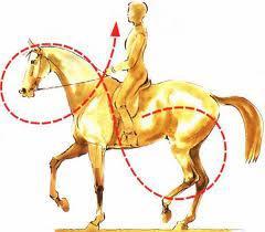 Tirer sur les rênes pour ralentir le cheval équiva…