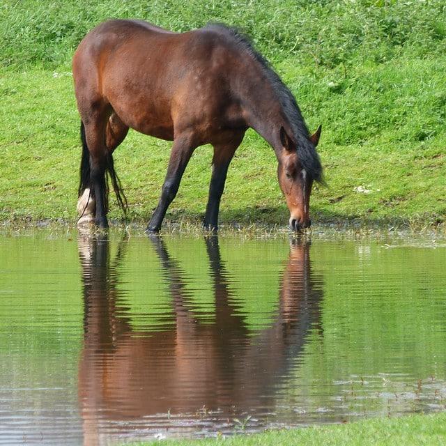 Votre cheval est votre miroir