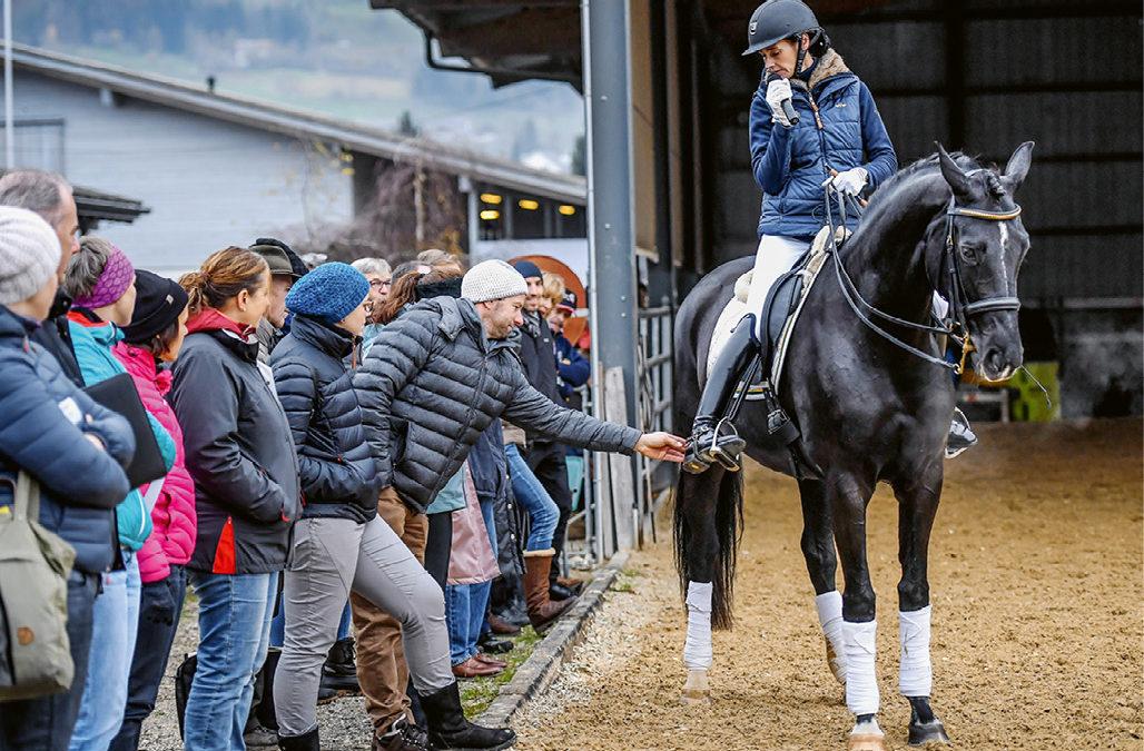 Dialogue entre la protection des animaux et les sports équestres – FNCH