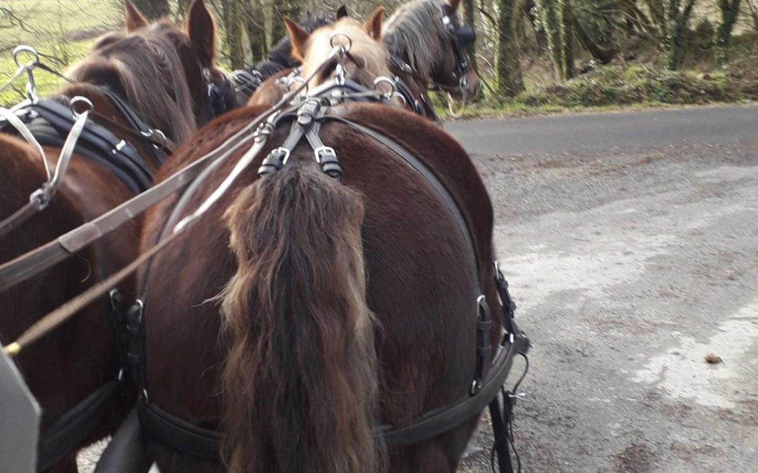 Entrainement 4 chevaux pour inauguration Equipôle …