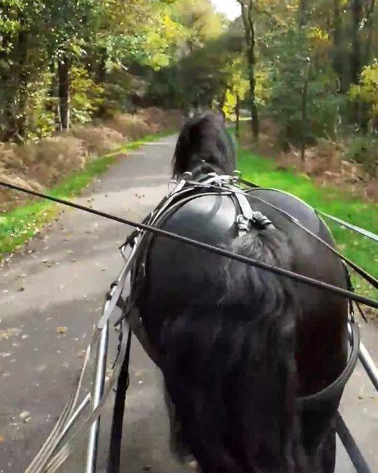 Derby le cheval breton de la paire qui était con…
