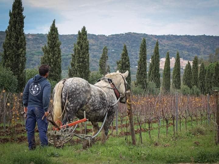 ON PARTAGE LES AMIS  Domaine viticole de 14 ha AB …
