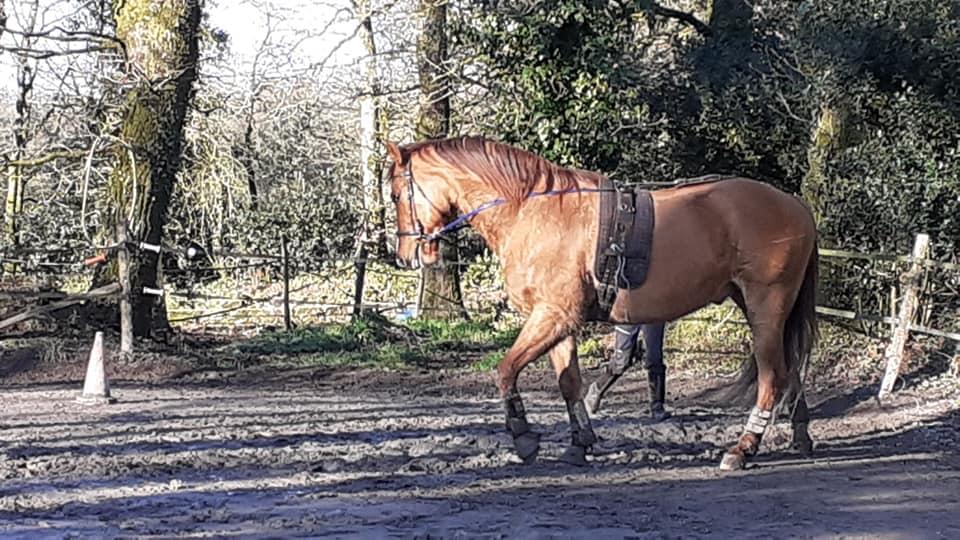 Aujourd'hui longues rênes avec Anouk ancienne stag…