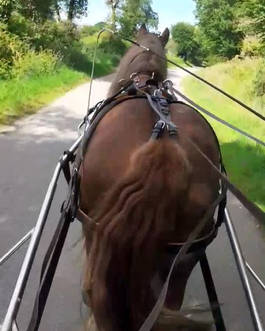 Tifenn aux guides de son cheval Funky. Le travail …
